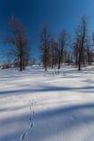 Le parc d'hiver avec la neige photos libres de droits