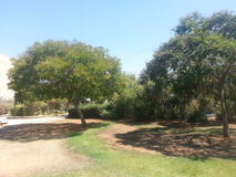 Le parc dans l'anana de ` de Ra, Israël Photo libre de droits
