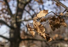 Le parc de Greenwich, sèchent des feuilles et un méli-mélo des branches Photos stock