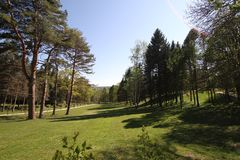 Le parc de ressort des arbres photos libres de droits