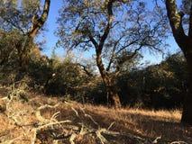 Le parc de Shiloh Ranch Regional The inclut les régions boisées de chêne, forêts des plantes vertes mélangées, arêtes avec des vu images libres de droits
