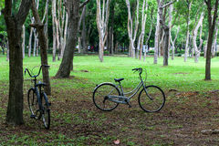 Le parc de vélo Image stock
