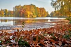 Le parc ensoleillé d'automne dans des couleurs d'or, dans le brun de premier plan part autour de l'étang avec une île colorée photo libre de droits