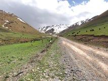 Le parc national d'Archa d'aile du nez dans les montagnes de Tian Shan de Bichkek Kirghizistan photos libres de droits