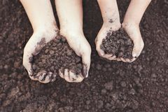 Le parent et l'enfant remettent tenir le sol dans la forme de coeur pour la plantation Photos libres de droits