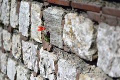 Le pareti di pietra hanno passato attraverso i fiori fotografia stock