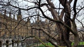 Le Parlement anglais peu de peu de place et de quelques arbres, Londres Images stock