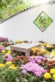 Le parterre coloré de chrysanthèmes dans le jardin Photos libres de droits