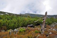 Le parti superiori delle montagne giganti (Krkonose) Immagini Stock
