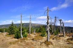 Le parti superiori delle montagne giganti (Krkonose) Immagine Stock