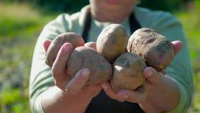 Le patate della tenuta dell'agricoltore Alimento sano con le vitamine Fresco e alimento biologico Concetto dei vegetariani, organ archivi video