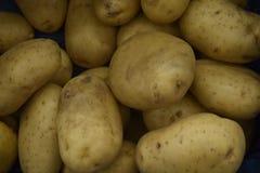 Le patate pulite fresche Prodotti agricoli Una base con finocchio Immagine Stock Libera da Diritti