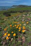 Le pavot d'or de la Californie fleurit, Big Sur, la route 1, la Californie Image stock