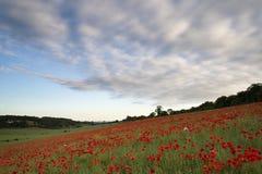 Le pavot met en place le coucher du soleil d'été de paysage. Photos libres de droits