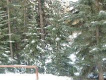 Le pays des merveilles canadien d'hiver images libres de droits