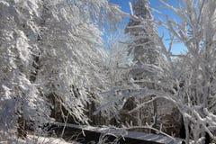 Le pays des merveilles d'hiver photos libres de droits