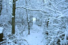 Le pays des merveilles d'hiver Photographie stock libre de droits