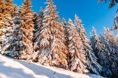 Le pays des merveilles d'hiver Photo libre de droits
