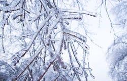 Le pays des merveilles d'hiver Photo stock