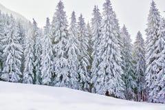 Le pays des merveilles d'hiver avec les arbres et les montagnes neigeux image libre de droits