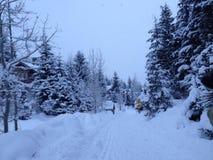 Le pays des merveilles d'hiver de Whistler images libres de droits