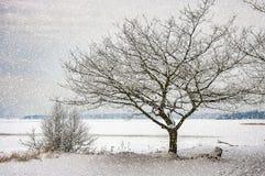 Le pays des merveilles d'hiver sur un lac congelé Photographie stock libre de droits