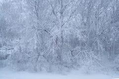 Le pays des merveilles de glace de neige Photos libres de droits