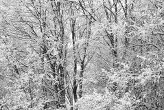 Le pays des merveilles de l'hiver photos stock