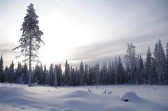 Le pays des merveilles de l'hiver au crépuscule, Suède images stock