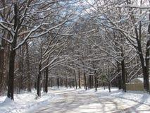 Le pays des merveilles de neige image stock