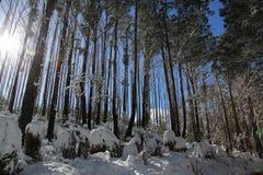 Le pays des merveilles ensoleillé d'hiver Photographie stock libre de droits
