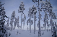 Le pays des merveilles suédois de l'hiver images libres de droits