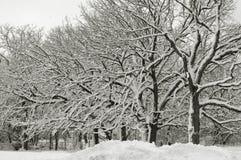 Le pays des merveilles VI de l'hiver Images libres de droits