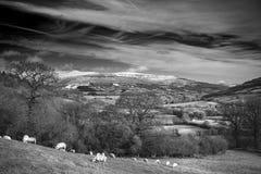 Le paysage agricole en hiver avec la neige a couvert la gamme de montagne Photographie stock libre de droits