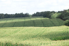 Paysage coloré avec le champ et les buissons Image libre de droits