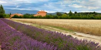 Le paysage d'été avec du blé et la lavande mettent en place en Provence, sout Photographie stock