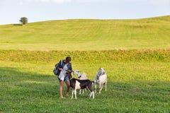 Le paysage d'été de pâturage avec la femme alimente frôler des chèvres photos stock