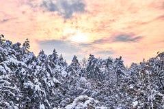 Le paysage d'aube d'hiver avec des arbres s'est recroquevillé avec la neige images libres de droits