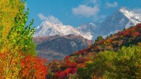 Le paysage d'automne de temps-faute de montagne avec la forêt colorée clips vidéos