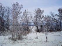 Le paysage d'hiver avec des arbres et le buisson deviennent couverts de hoarfr Image libre de droits