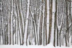 Le paysage d'hiver avec la neige a couvert des troncs d'arbre photo libre de droits