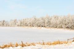 Le paysage d'hiver avec la neige fraîche a couvert des arbres Image libre de droits