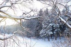 Le paysage d'hiver, branches a couvert de neige dans la perspective des sapins et du lac congelé de forêt photographie stock