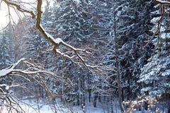 Le paysage d'hiver, branches a couvert de neige dans la perspective des sapins, forêt photographie stock