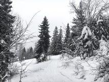 Le paysage d'hiver dans la forêt conifére a abandonné la vieille maison en bois, la hutte du ` s de forestier sur un pré neigeux  Photographie stock
