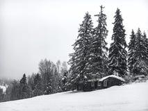 Le paysage d'hiver dans la forêt conifére a abandonné la vieille maison en bois, la hutte du ` s de forestier sur un pré neigeux  Image libre de droits