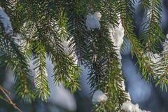 Le paysage d'hiver Les arbres dans la neige Image stock