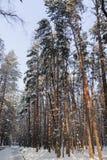 Le paysage d'hiver Les arbres dans la neige Image libre de droits