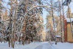 Le paysage d'hiver Les arbres dans la neige Images stock