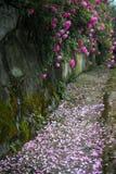 Le paysage dans la roseraie Photos stock